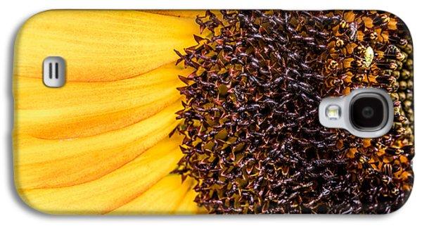 Sunflower Closeup Galaxy S4 Case