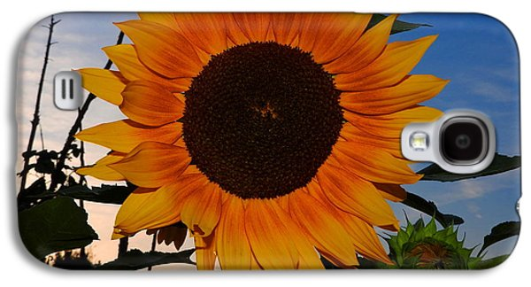 Sunflower In The Evening Galaxy S4 Case