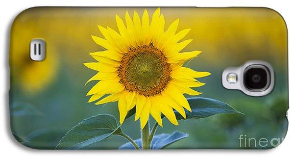 Sunflower Galaxy S4 Case by Tim Gainey