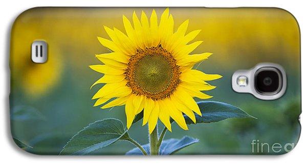 Sunflower Galaxy S4 Case - Sunflower by Tim Gainey