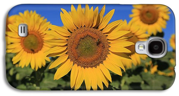 Sunflowers On A Summer Morning Galaxy S4 Case