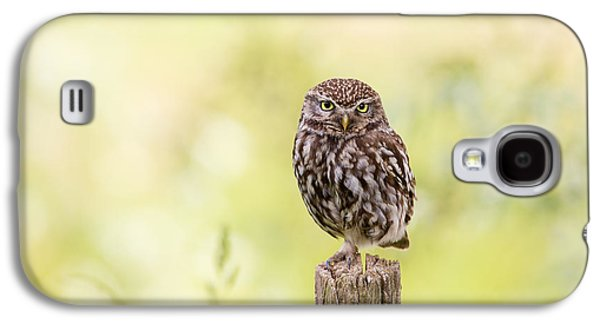 Sunken In Thoughts - Staring Little Owl Galaxy S4 Case