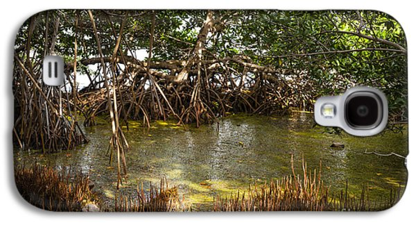 Sunlight In Mangrove Forest Galaxy S4 Case by Elena Elisseeva