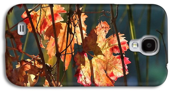 Sunlight In The Vineyard Galaxy S4 Case by Art Block Collections