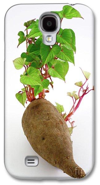 Sweet Potato Galaxy S4 Case by Gaspar Avila