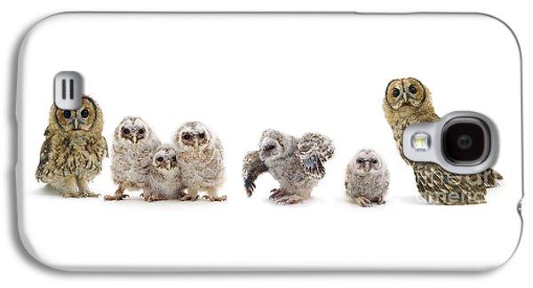 Tawny Owl Family Galaxy S4 Case