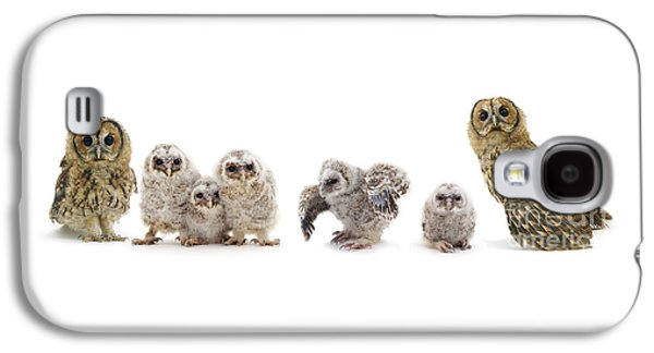 Tawny Owl Family Galaxy S4 Case