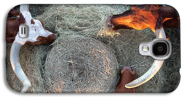 Texas Longhorn Cattle, Ft. Worth Stockyards Galaxy S4 Case by Greg Kopriva