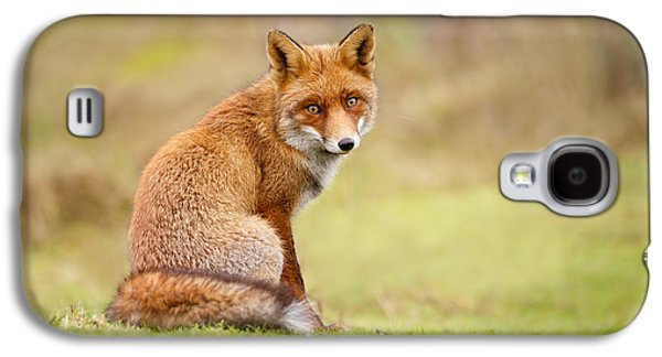 That Look - Red Fox Male Galaxy S4 Case by Roeselien Raimond