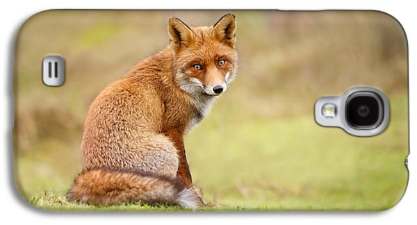 That Look - Red Fox Male Galaxy S4 Case