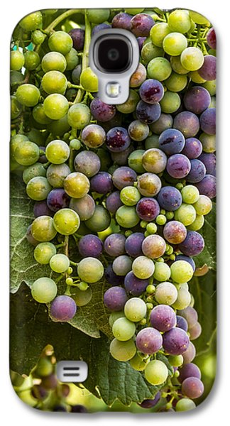 The Art Of Wine Grapes Galaxy S4 Case by Teri Virbickis
