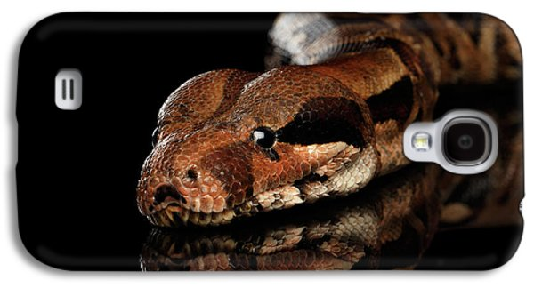 The Boa Constrictors, Isolated On Black Background Galaxy S4 Case
