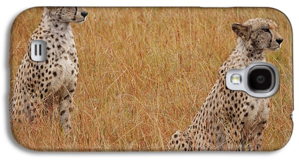 The Cheetahs Galaxy S4 Case by Nichola Denny