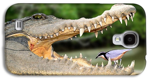 The Crocodile Bird Galaxy S4 Case