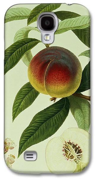 The Galande Peach Galaxy S4 Case by William Hooker