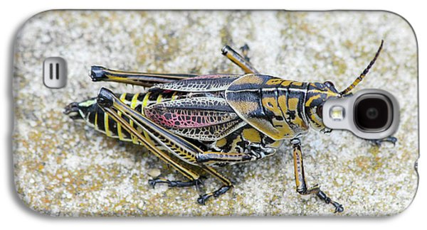 The Hopper Grasshopper Art Galaxy S4 Case by Reid Callaway