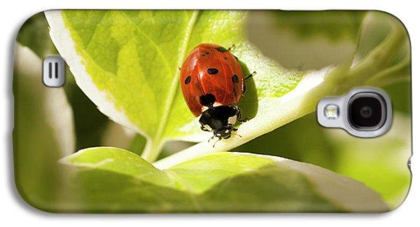 The Ladybug  Galaxy S4 Case