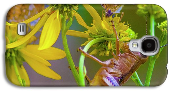 Grasshopper Galaxy S4 Case - The Little Things by Betsy Knapp