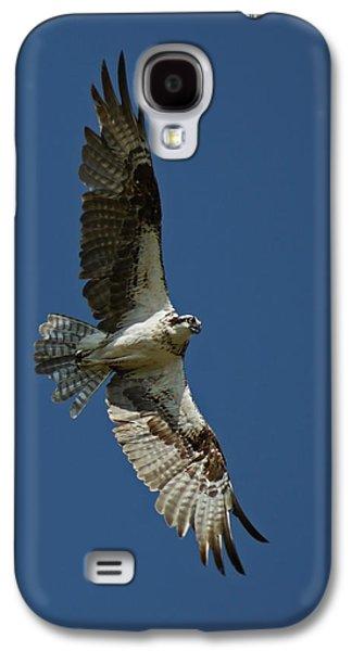 The Osprey Galaxy S4 Case by Ernie Echols