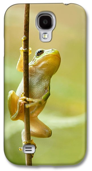 The Pole Dancer - Climbing Tree Frog  Galaxy S4 Case by Roeselien Raimond