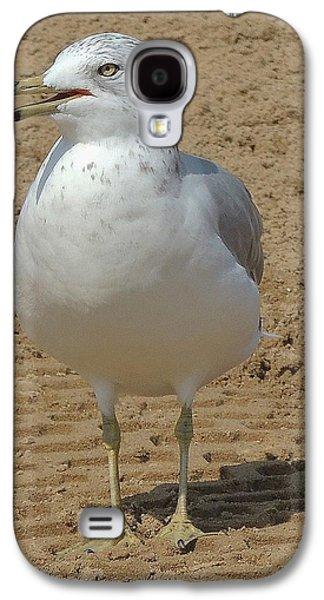 Belmont Beach Bird Galaxy S4 Case by Todd Sherlock