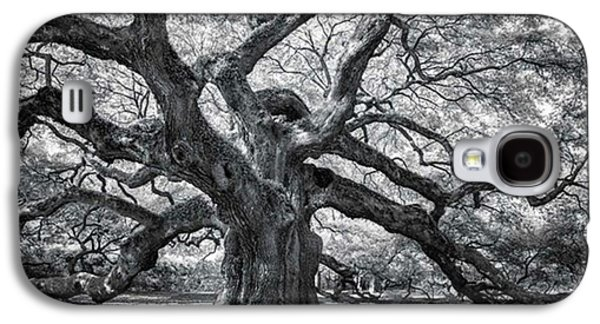 Galaxy S4 Case - This Tree Is Located In Charleston by Jon Glaser