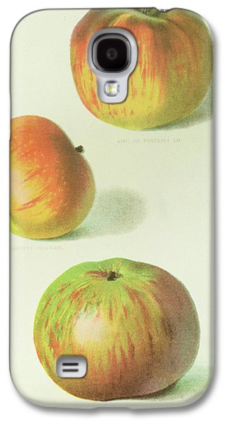 Three Apples Galaxy S4 Case by English School
