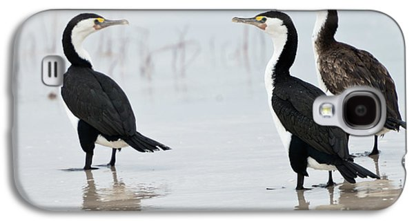 Galaxy S4 Case featuring the photograph Three Cormorants by Werner Padarin
