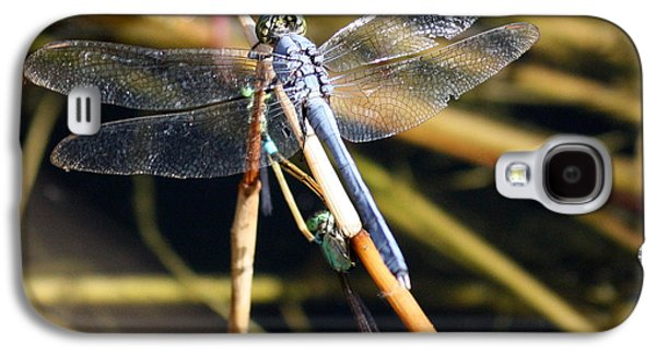 Buy Galaxy S4 Cases - Three Dragonflies on One Reed Galaxy S4 Case by Carol Groenen