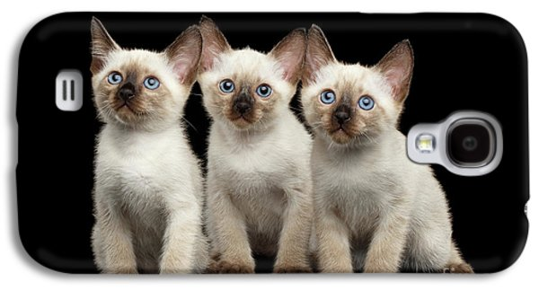 Cat Galaxy S4 Case - Three Kitty Of Breed Mekong Bobtail On Black Background by Sergey Taran