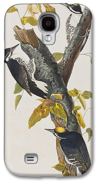 Three Toed Woodpecker Galaxy S4 Case