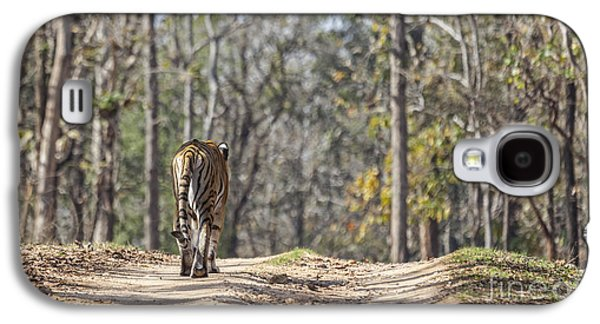 Tigress Walking Along A Track In Sal Forest Pench Tiger Reserve India Galaxy S4 Case by Liz Leyden