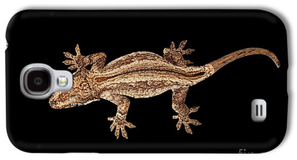 Top View Of Gargoyle Gecko, Rhacodactylus Auriculatus Staring Isolated On Black Background. Native T Galaxy S4 Case by Sergey Taran