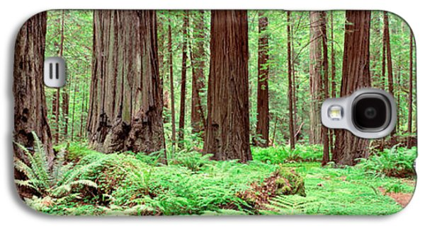 Trail, Avenue Of The Giants, Founders Galaxy S4 Case by Panoramic Images