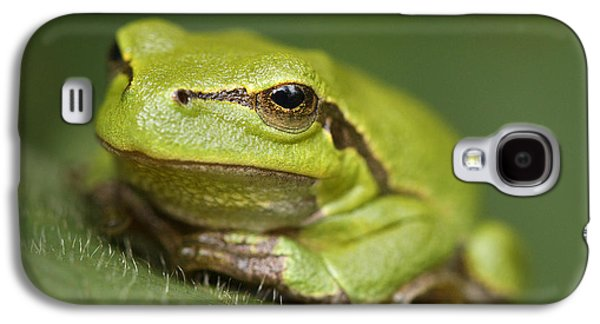 Tree Frog Cose Up Galaxy S4 Case by Roeselien Raimond