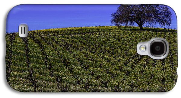 Tree In The Vineyards Galaxy S4 Case by Garry Gay