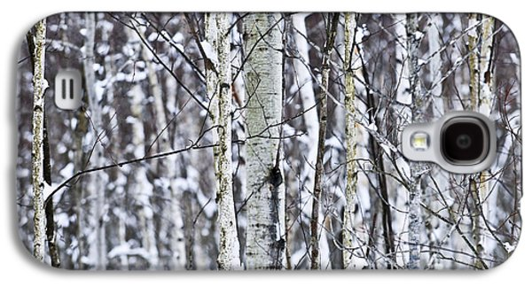 Winter Trees Photographs Galaxy S4 Cases - Tree trunks covered with snow in winter Galaxy S4 Case by Elena Elisseeva
