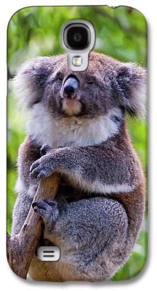 Treetop Koala Galaxy S4 Case