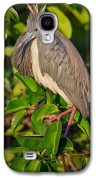 Tricolored At The Venice Rookery Galaxy S4 Case by Andres Leon