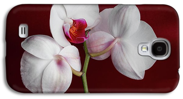 Orchid Galaxy S4 Case - Trio Of Orchids by Tom Mc Nemar