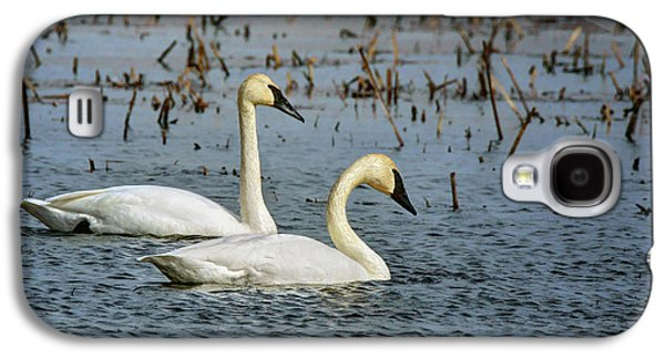 Trumpeter Swan - Pair Galaxy S4 Case by Nikolyn McDonald