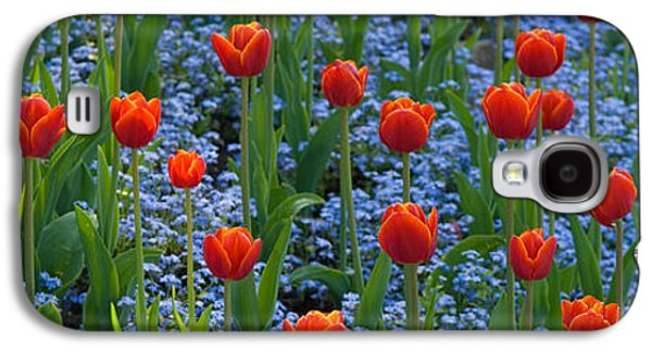 Tulips In A Garden, Butchart Gardens Galaxy S4 Case by Panoramic Images