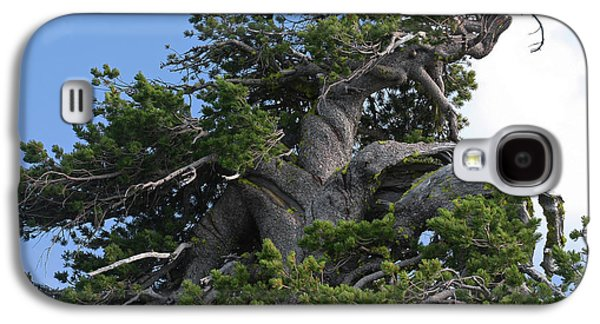 Twisted And Gnarled Bristlecone Pine Tree Trunk Above Crater Lake - Oregon Galaxy S4 Case
