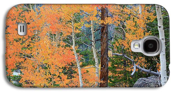 Galaxy S4 Case featuring the photograph Twisted Pine by David Chandler