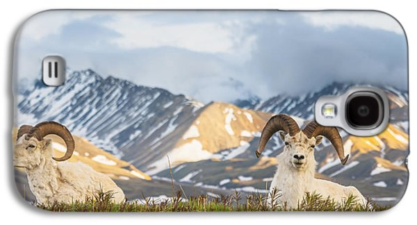 Two Adult Dall Sheep Rams Resting Galaxy S4 Case by Michael Jones