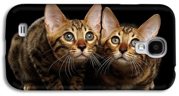 Two Bengal Kitty Looking In Camera On Black Galaxy S4 Case by Sergey Taran