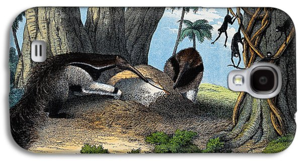 Two Giant Anteaters Feeding On Termites Galaxy S4 Case