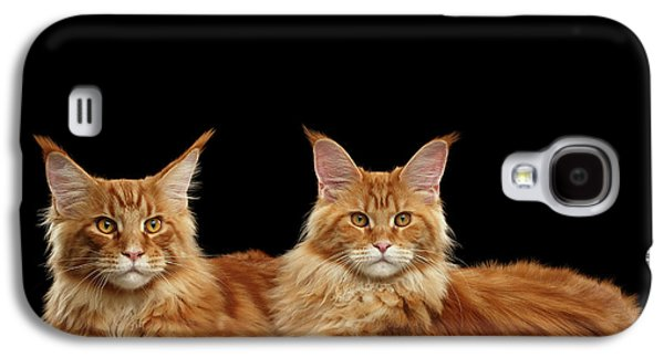 Cat Galaxy S4 Case - Two Ginger Maine Coon Cat On Black by Sergey Taran