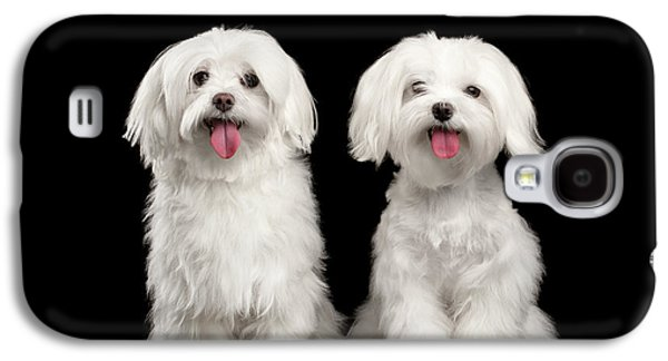 Two Happy White Maltese Dogs Sitting, Looking In Camera Isolated Galaxy S4 Case by Sergey Taran