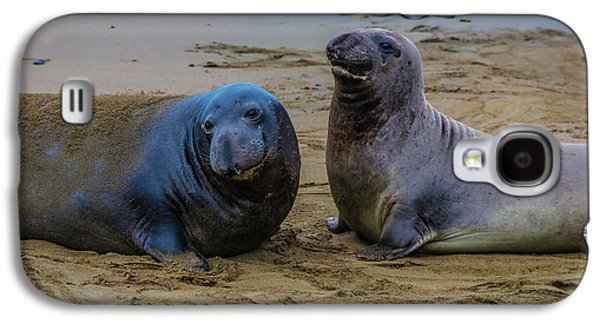 Two Male Elephant Seals Galaxy S4 Case